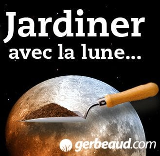 jardiner avec la lune en d cembre le potager d 39 ir ne. Black Bedroom Furniture Sets. Home Design Ideas